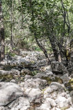 Source of river Guadalquivir. Creek with a small waterfall located in the Spanish town of Cazorla, is surrounded by trees. it´s source of the river stock photography
