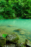 The source of the river Kupa in forest Royalty Free Stock Photography