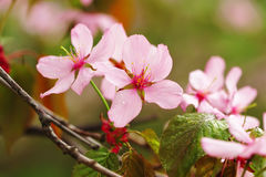 Source sakura images stock