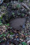 Source souterraine naturelle d'eau de source dans la forêt sauvage photographie stock