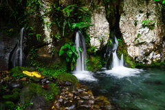 Source of spring water Royalty Free Stock Image