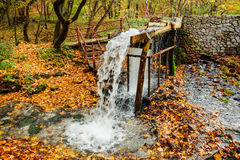 The source of the stream in the autumn forest Stock Photos