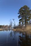 Source sur le lac de forêt Image stock