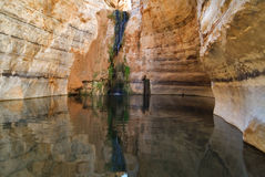 Source of water. Picturesque canyon Ein-Avdat in desert Negev in Israel Stock Images