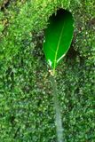 Source of water. Leaf in the Moss, spring Royalty Free Stock Photography