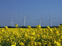 Sources d'énergie, colza et vent régénérateurs Photos stock