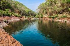 Sources de forêt et d'eau Photos stock