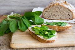Sourdough bread with butter and wild garlic. Leaves Stock Image