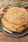 Sourdough homemade round white wheat bread close up. In Italy royalty free stock photos