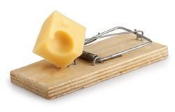 Souricière à clapet avec du fromage d'isolement sur le blanc Photo libre de droits