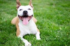 Sourire amical de chien Photos stock