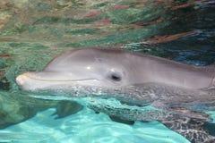 Sourire de dauphin Photo libre de droits