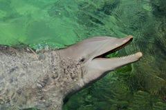 Sourire de dauphin Photographie stock libre de droits