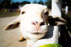 Sourire de piaulement Photographie stock libre de droits