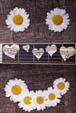 Sourire des marguerites et de la guitare Photos stock