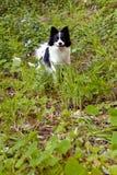 Sourire noir et blanc mignon de chien Image stock