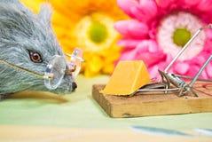 Souris avec du fromage dans le piège Photo stock