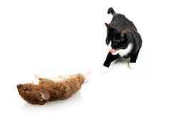 souris de chat Photo libre de droits