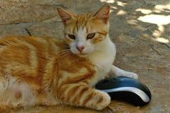 Souris de chat et d'ordinateur Images stock