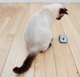 Souris de chat et d'ordinateur sur l'étage de bois dur Photos libres de droits
