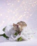 Souris de fleur Image stock