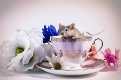 Souris de fleur dans la tasse de thé Photos libres de droits