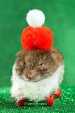 Souris de Noël de père sur la planche à roulettes Image stock