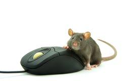 Souris de rat et d'ordinateur images stock