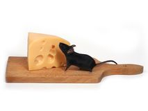 Souris et fromage Photo stock