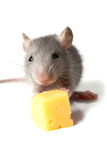 Souris et fromage Images stock