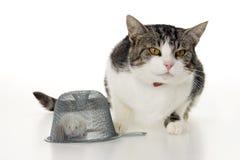 Souris et souricière de chat. Photographie stock