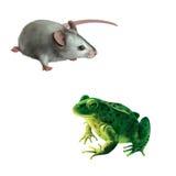 Souris grise mignonne, grenouille verte avec des taches repèré Images stock