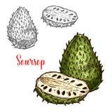 Soursop διανυσματικά εξωτικά φρούτα σκίτσων Απεικόνιση αποθεμάτων