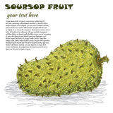 Soursop Royaltyfri Foto