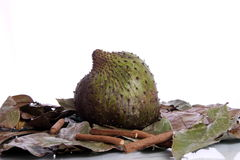 Soursop along with leaves and stick Royalty Free Stock Photo