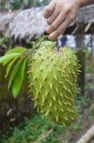 Soursop - guyabano fruit Royalty Free Stock Photography