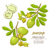 Soursop vector set stock illustration
