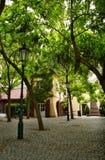 Sous des arbres Image libre de droits