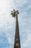 Sous des palmiers de sucre Photo libre de droits