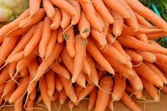 Sous-espèce de carota de Daucus d'arrot de ¡ de Ð sativus Image stock