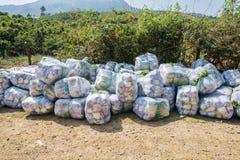 Sous-espèce de rapa de brassica pekinensis, légumes moissonnés Photo libre de droits