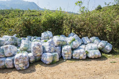 Sous-espèce de rapa de brassica pekinensis, légumes moissonnés Photos libres de droits