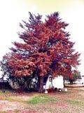 Sous l'arbre Photo stock