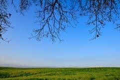 sous l'arbre Photo libre de droits