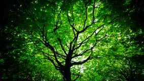 Sous l'arbre d'érable photographie stock libre de droits