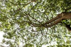 Sous l'arbre vert Images libres de droits