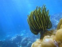 Sous l'eau Image stock