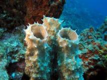 Sous l'eau Bonaire Images libres de droits