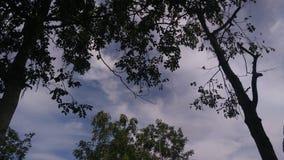Sous l'ombre foncée de l'arbre photographie stock