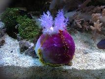Sous la beauté de mer Photo libre de droits